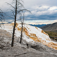 Canary Spring at Mammoth Hot Springs in Yellowstone National Park, Wyoming, United States.