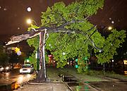 oak tree splits during rain and wind, falls on St. Charles Avenue streetcar lines, disrupting service; 1500 block of St. Charles Avenue