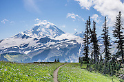 See Mount Baker (elevation 10,781 feet) from Skyline Divide trail in Mount Baker Wilderness, Mount Baker-Snoqualmie National Forest, Washington, USA.