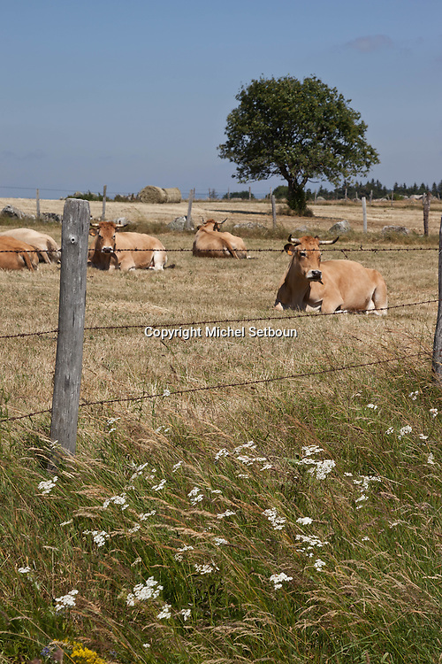 landscape of aubrac after the harvest, france  /  paysage de  l aubrac apres la moisson , France