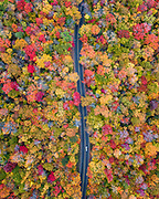 A car drives down a road through a canopy of beautiful fall colors on the way to an unknown destination.
