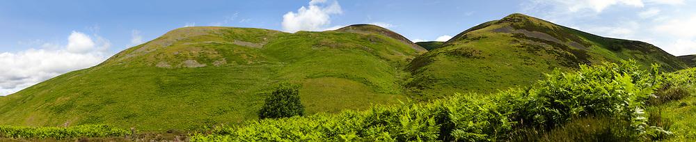 Heatherhope, Cheviot Hills, Scottish Borders, UK. 12th July 2015. Looking north east towards Blackbrough Hill.