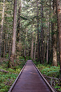 Trail of the Cedars is another great and easy hike that is fun for families.