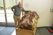 Julian Grey, Director of the Rice Northwest Museum in the Dennis and Mary Murphy Petrified Wood Gallery studies a large opal filled thunderegg