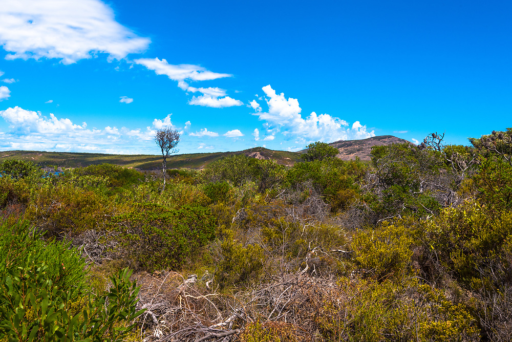 Looking up and over a green hill in Esperance, Australia with a blue sky in the background.