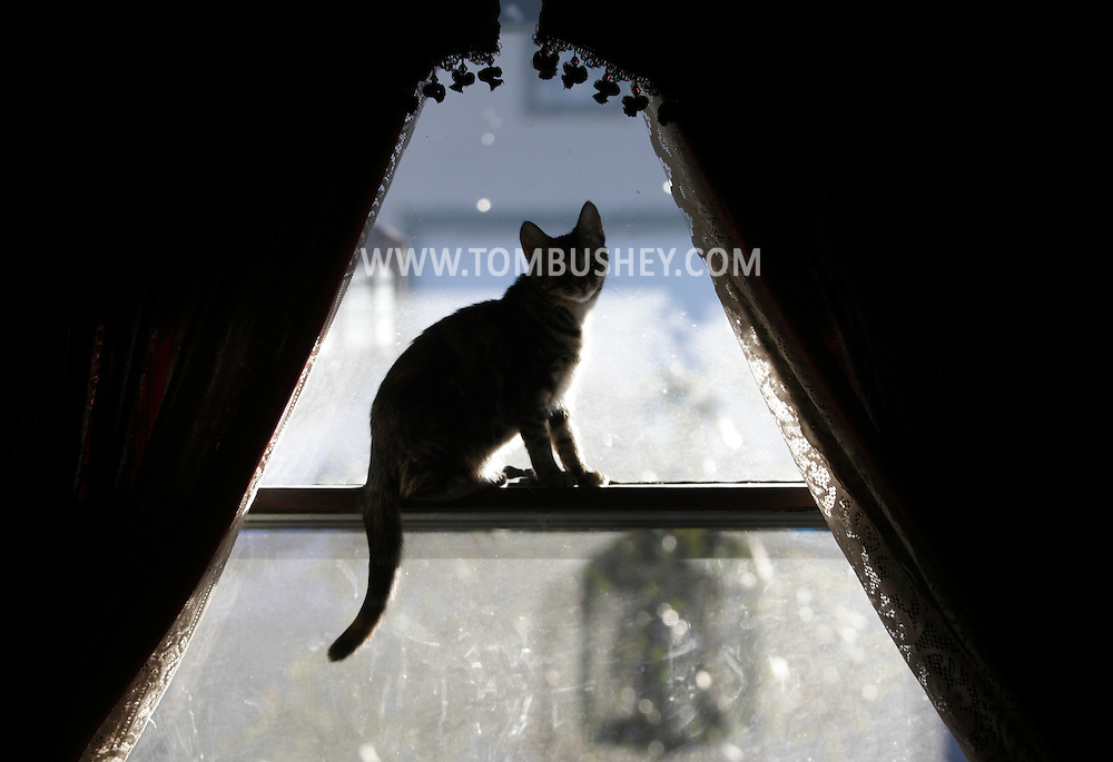 Middletown, NY - A cat sits at the window of a house on Dec. 29, 2009.