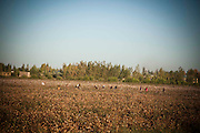 Workers are seen at a cotton farm in Uzbekistan.