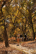 Equestrians ride the Juan Bautista de Anza National Historic Trail, a popular hiking trail run by the National Park Service, along the Santa Cruz River Tubac, Arizona, USA.