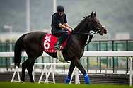 HONG KONG - DECEMBER 07:  Poets Word completes trackwork at Sha Tin Race Course on December 07, 2017 in Hong Kong. (Photo by Alex Evers/Eclipse Sportswire/Getty Images)