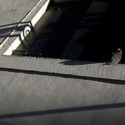 Italy, Veneto, Venice. November/12/2007...A lone pigeon perches on a window sill in Venice, Italy.