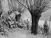 World War I 1914-1918: German field telephone post under pollarded willow trees on the banks of the River Aisne, north-eastern France, 1915. Military, Army, Communications, Technology