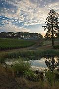 Pinot Noir harvest at Alexana Estate Vineyards, Dundee Hills AVA, Willamette Valley, Oregon