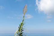Mediterranean grass on blue