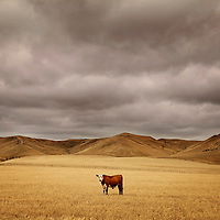Bull, Martinrorough