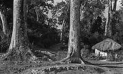 Landscape, Virajpet, Coorg, Karnataka State, India