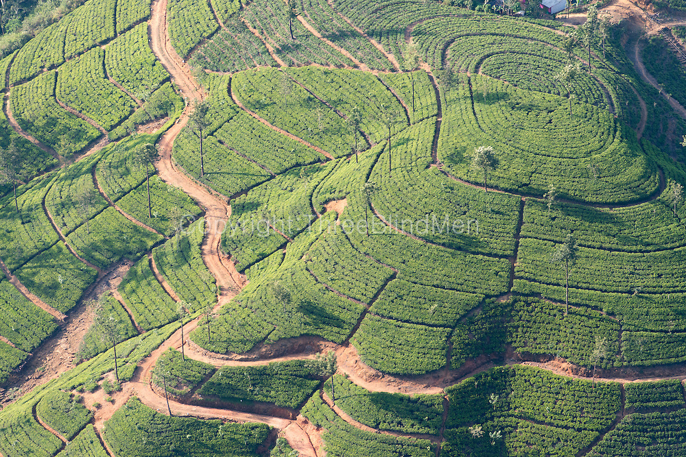Sri Lanka. Tea estate.<br />