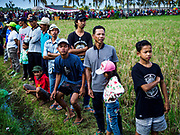 30 JULY 2017 - TUWED, JEMBRANA, BALI, INDONESIA: Spectators line a rice field during a makepung (buffalo race) in Tuwed, Jembrana in southwest Bali. Makepung is buffalo racing in the district of Jembrana, on the west end of Bali. The Makepung season starts in July and ends in November. A man sitting in a small cart drives a pair of buffalo bulls around a track cut through rice fields in the district. It's a popular local past time that draws spectators from across western Bali.    PHOTO BY JACK KURTZ