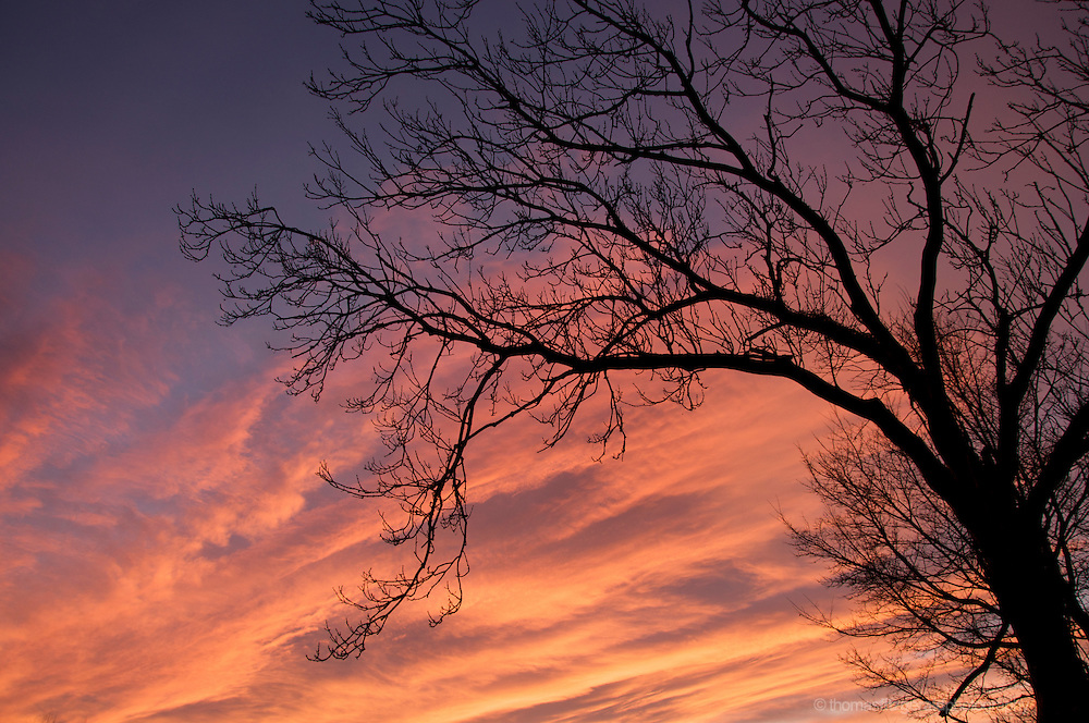 Against the beautiful red clouds of a winter moring stands the Silhouette of a bare winter tree