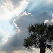 Sunbeams shine through a cloudy sky behind a palm tree.