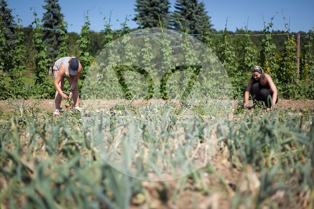SCHWEIZ - MEISTERSCHWANDEN - Zwei Frauen ernten Zwiebeln auf dem Feld - 16. Juli 2014 © Raphael Hünerfauth - http://huenerfauth.ch