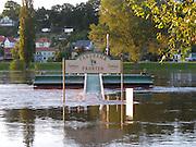 Hochwasser an der Elbe, Pirna, Sachsen, Deutschland.|.hight water on Elbe, Pirna, Saxony, Germany