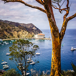 Catalina Island aerial photo of Avalon Bay with the Catalina Casino in Avalon California. Large photo is high resolution.