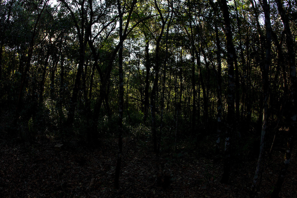 Nova Lima_MG, 20 de maio de 2011.<br /> <br /> Estacao Ecologica de Fechos em Nova Lima, Minas Gerais.<br /> <br /> Fechos Ecological Station in Nova Lima, Minas Gerais.<br /> <br /> Foto: MARCUS DESIMONI / NITRO