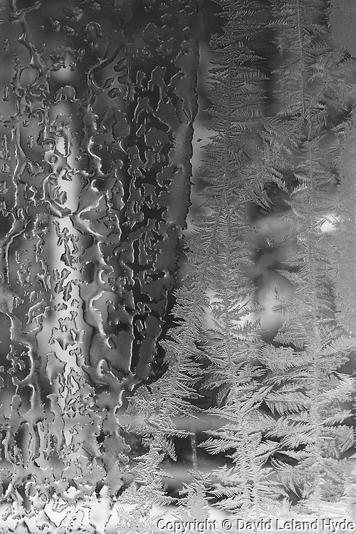 Frost Trees on Window, Rough Rock, Sierra Nevada Mountains, Black and White