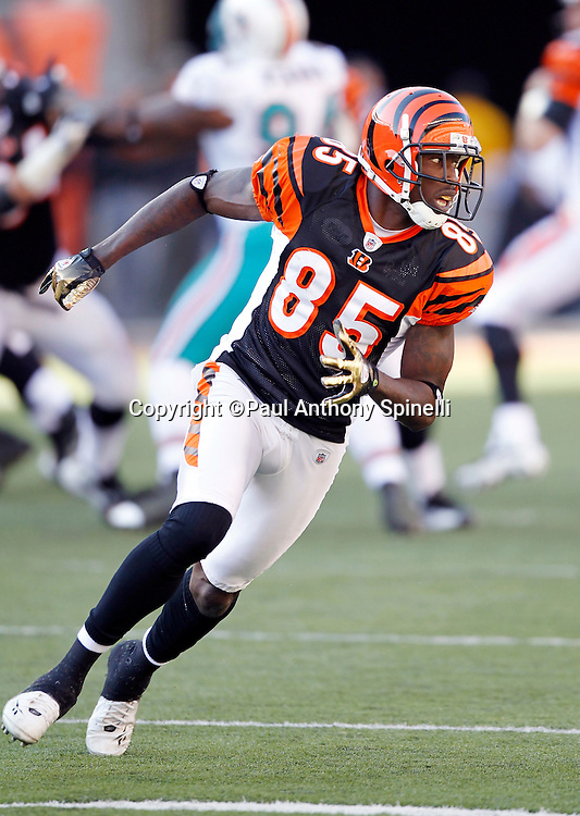 Cincinnati Bengals wide receiver Chad Ochocinco (85) goes out for a pass during the NFL week 8 football game against the Miami Dolphins on Sunday, October 31, 2010 in Cincinnati, Ohio. The Dolphins won the game 22-14. (©Paul Anthony Spinelli)