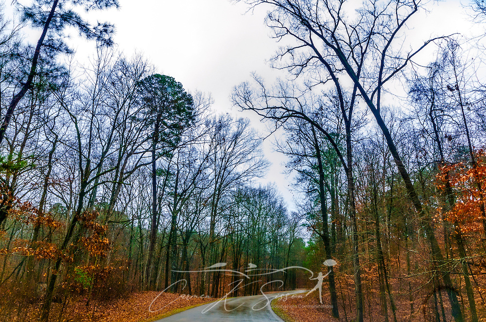 A wet road leads up the hillside at Jeff Busby State Park, located along the Natchez Trace Parkway near Ackerman, Miss., at milepost 193.1. The park was named in honor of Mississippi U.S. Congressman Thomas Jefferson Busby, who was instrumental in having the Old Trace surveyed. The Natchez Trace follows a 440-mile route from Natchez, Miss. to Memphis, Tenn. (Photo by Carmen K. Sisson/Cloudybright)