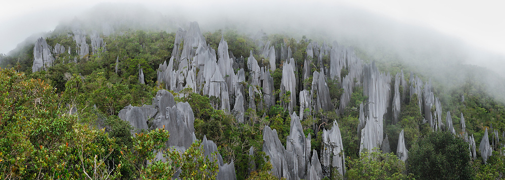 Weathering from rain and wind has given rise to these razor-sharp limestone pinnacles, which can be found on the upper slopes of Mount Api in Mulu National Park. Sarawak, Malaysia.