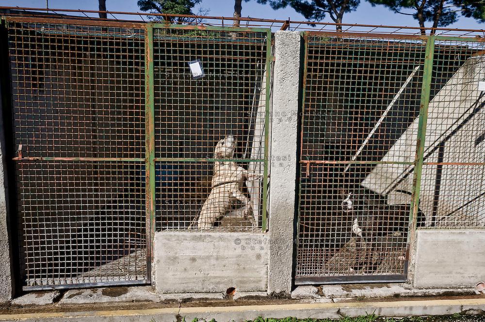 Roma 2  Novembre 2015<br /> Presidio al canile dell' ex Cinodromo di Ponte Marconi, degli attivisti di Animalisti Italiani  insieme all'attrice Loredana Cannata, ai volontari de L'Impronta e Avcpp (associazione volontari canili di Porta Portese) per evitare che la nuova società  la Mapia Srl entri in possesso del canile, mettendo la parola fine a quella che fino ad oggi è stata una gestione virtuosa dei cani senza padrone della Capitale.L'interno del canile<br /> Rome, November 2, 2015<br /> Sit-in the doghouse the former dog track to Ponte Marconi,of the Italian Animal rights activists with actress Loredana Cannata, the volunteers of The imprint and Avcpp (Association volunteers kennels Portaportese) to prevent the new company the Mapia Srl  comes into possession of kennel, putting an end to what until now has been a virtuous management of ownerless dogs in the capital. The interior of the kennel