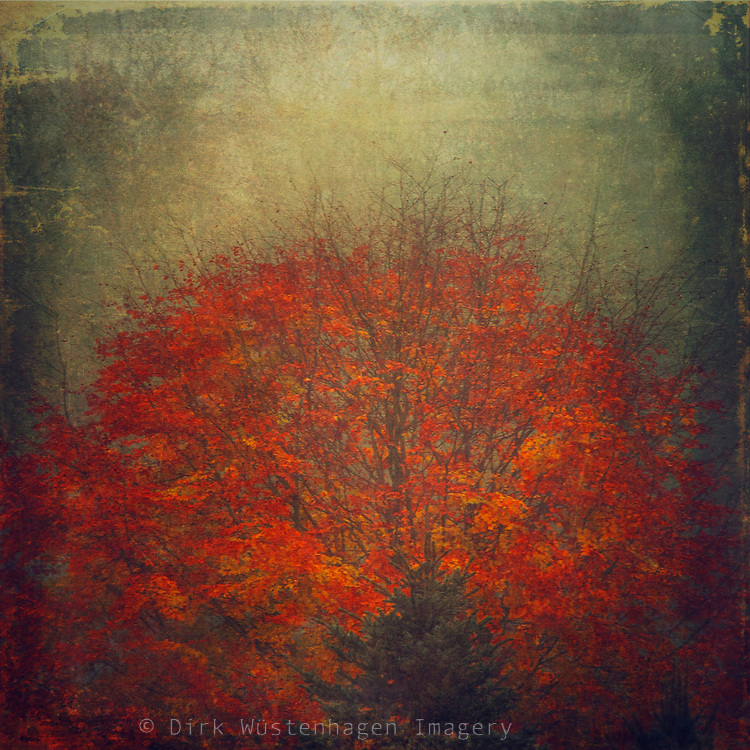 Maple tree with fall leaves - painterly texture processing<br />