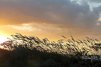 Silhouette of sea oats and a sand dune on a cloudy sunrise at the Outer Banks of NC.