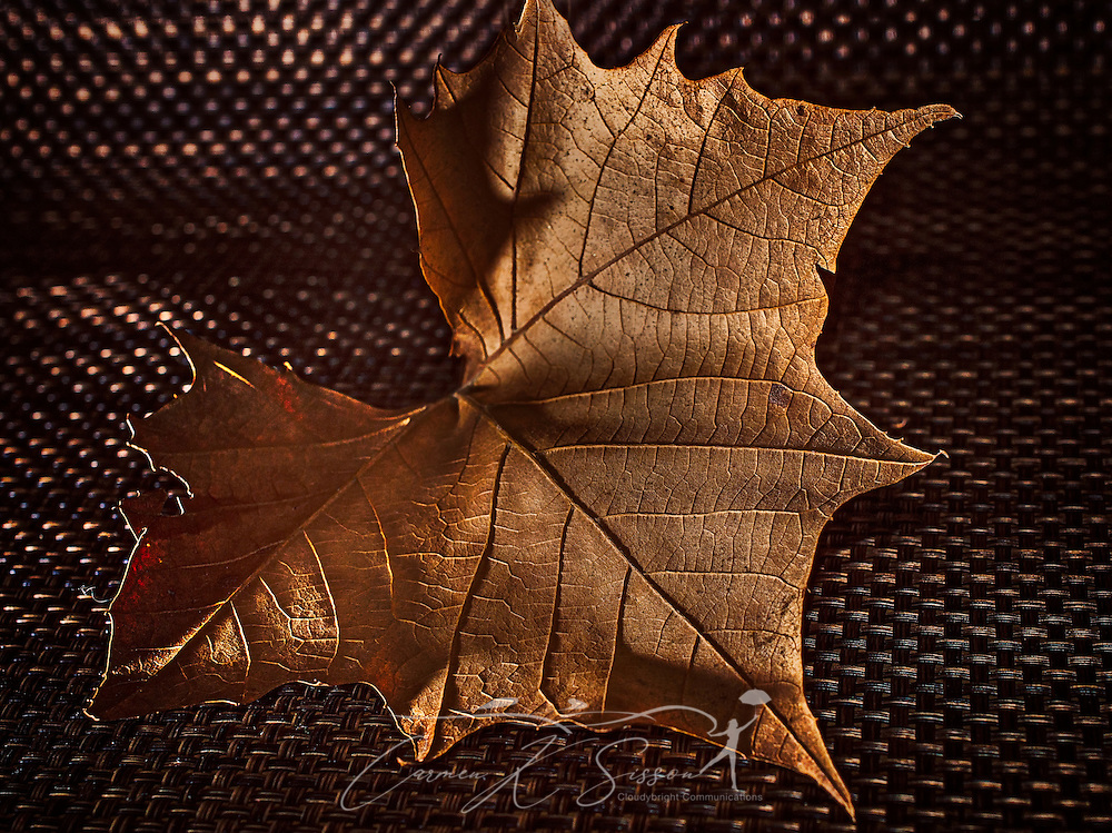 A red maple leaf is pictured on a woven placemat, January 9, 2017, in Coden, Alabama. (Photo by Carmen K. Sisson/Cloudybright)