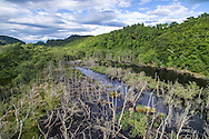 Dubh loch in Knapdale forest with wetland habitat created by beavers reintroduced as part of the official Scottish Beaver Trial.