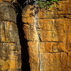 Rock and tree root formation, King George River, Kimberley, AUSTRALIA