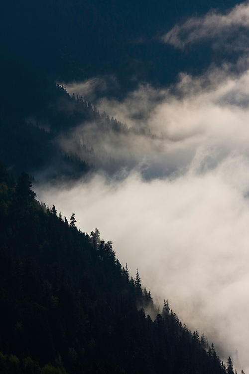 Clouds rising and old mountain forest on slope of the Kouprova valley. Western Tatras, Slovakia. June 2009. Mission: Ticha