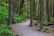 Second Canyon Trail winds through the temperate rainforest at Capilano River Regional Park in North Vancouver, British Columbia, Canada.