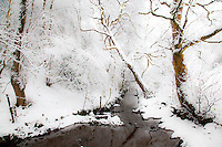 snowy riverbank and woodland