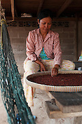 A women picker sorts and picks out bad pepper corns on a table below her house.