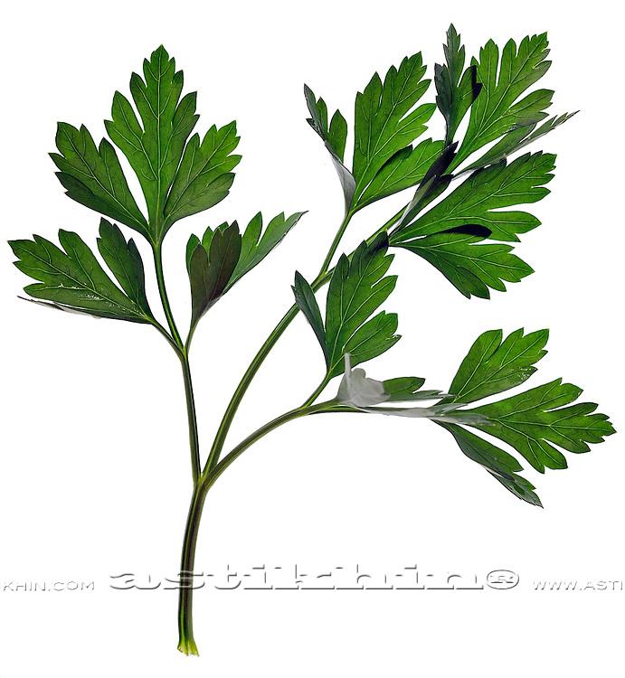 Green organic parsley on white