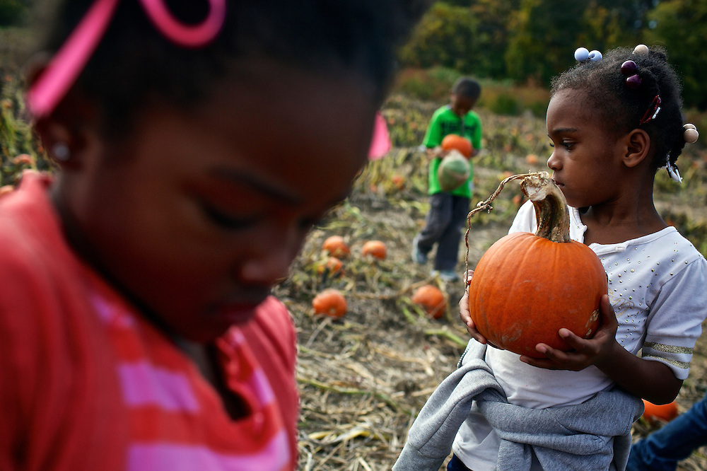 """Calvin Rodwell Elementary School students, including Unique Childs, 4, right, select pumpkins to take home at Summers Farm in Frederick, MD on Oct. 24, 2012. The visit to the farm was part of a """"Common Core"""" reading and learning unit for their class, which aims to follow up non-fiction reading with learning in the field. The day prior the children read a book about going to a farm."""