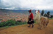 Indigenous woman in colourful clothes walking a llama, Cusco, Peru