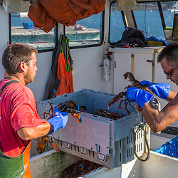 Sternmen Nick Hynd (left) and Michael Estes unload lobsters from the 'Pontus' at the Tenants Harbor Fisherman's Coop in Tenants Harbor, Maine.