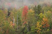 Fall foliage Grafton Notch, Maine