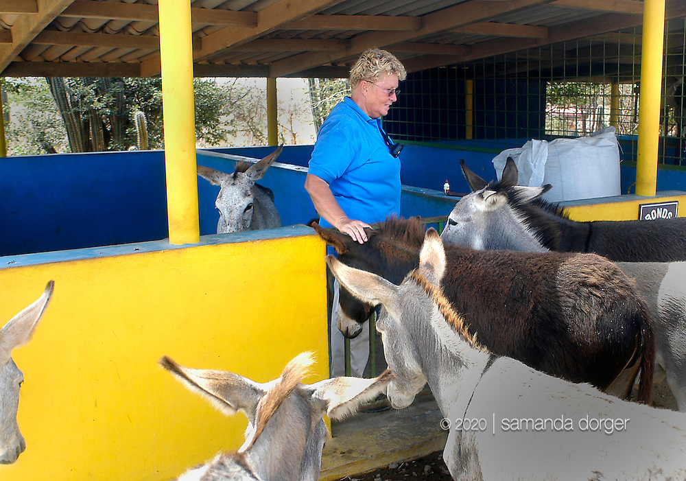 Donkeys gather around Donkey Sanctuary founder and keeper Marina Melis as Melis cleans out stables on the Caribbean island of Bonaire September 1, 2005. Donkeys, no longer used on the island as beasts of burden, now wander in search of food and often are struck by vehicles. The sanctuary protects over 200 donkeys.