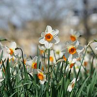 UK Weather: Spring sunshine in London