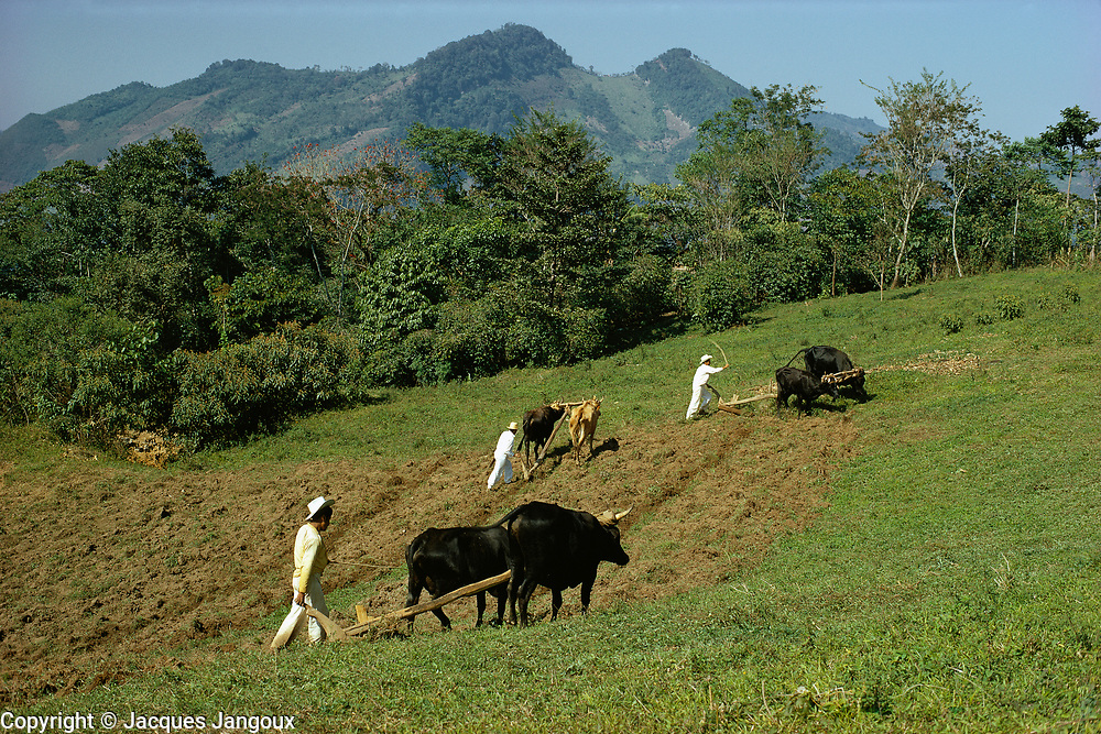 Mexico: Totomac Indians plowing field with oxen-driven plow in Sierra de Puebla mountains, Puebla State, Mexico (village: Ixtepec)