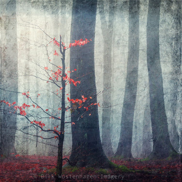 Last autumn leaves on a little beech tree on a foggy and rainy day. Texturized photograph.<br /> Prints. http://society6.com/DirkWuestenhagenImagery/Last-Red-Leaves_Print